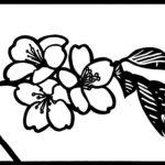 桜 さくら 切り絵 図案 下絵 無料 フリー